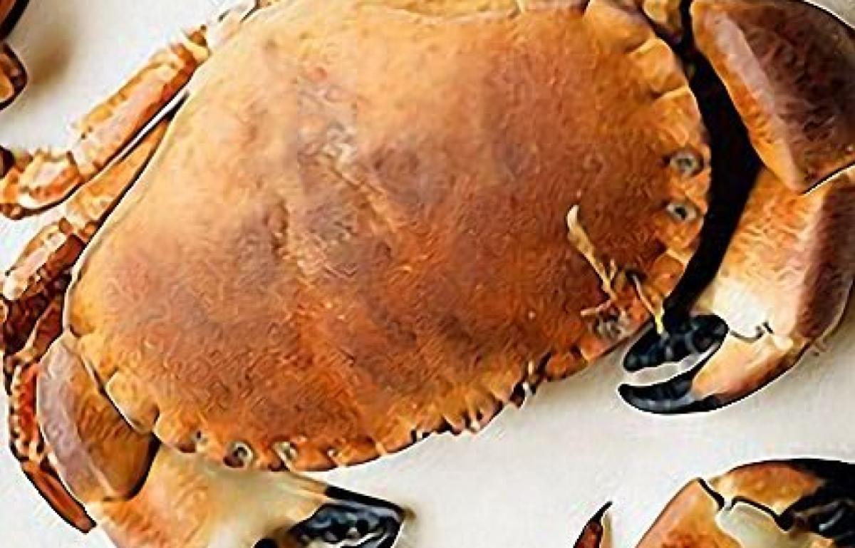 Crabs 19440