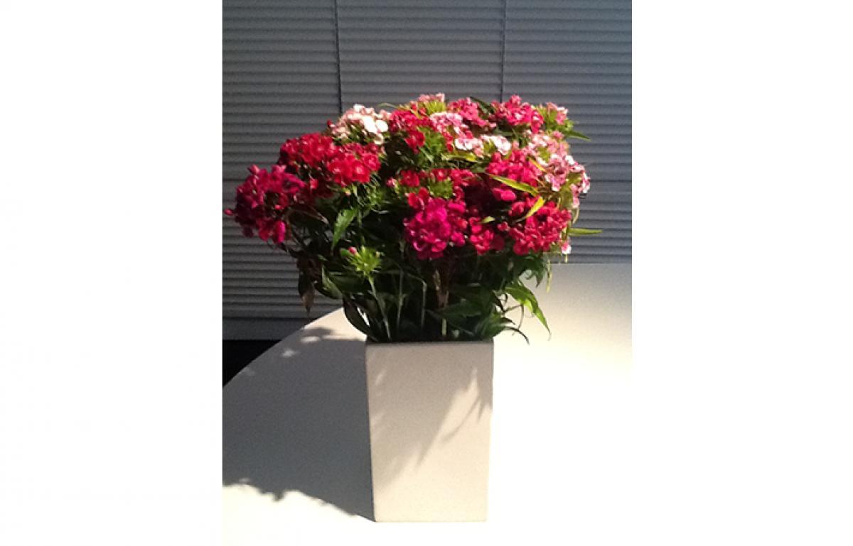 Flowers 3x2