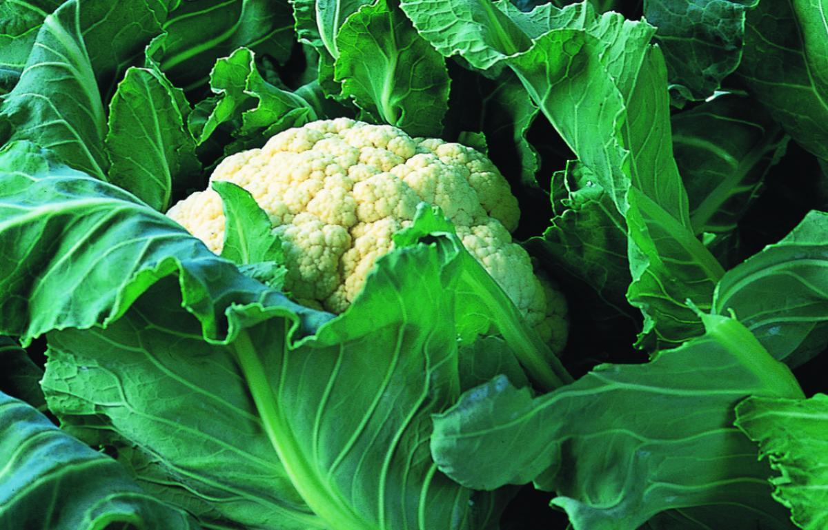 Ingredient chicken cauliflower