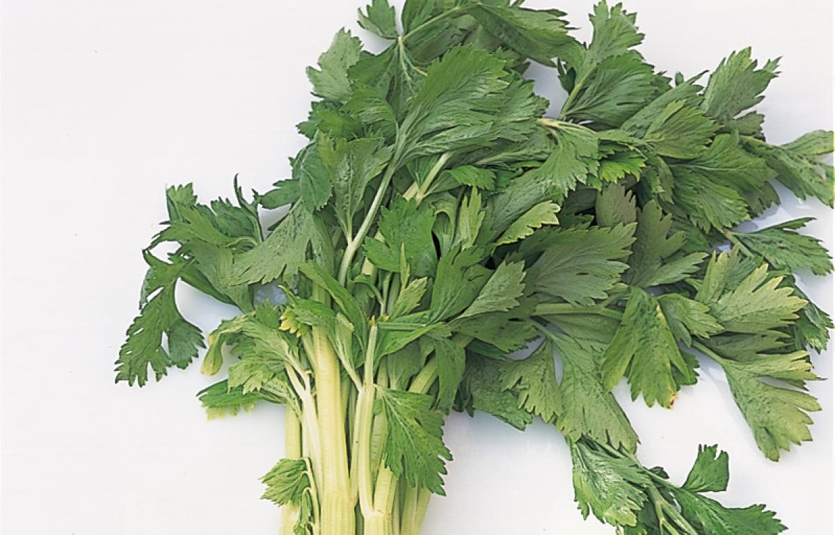 Ingredient htc celery
