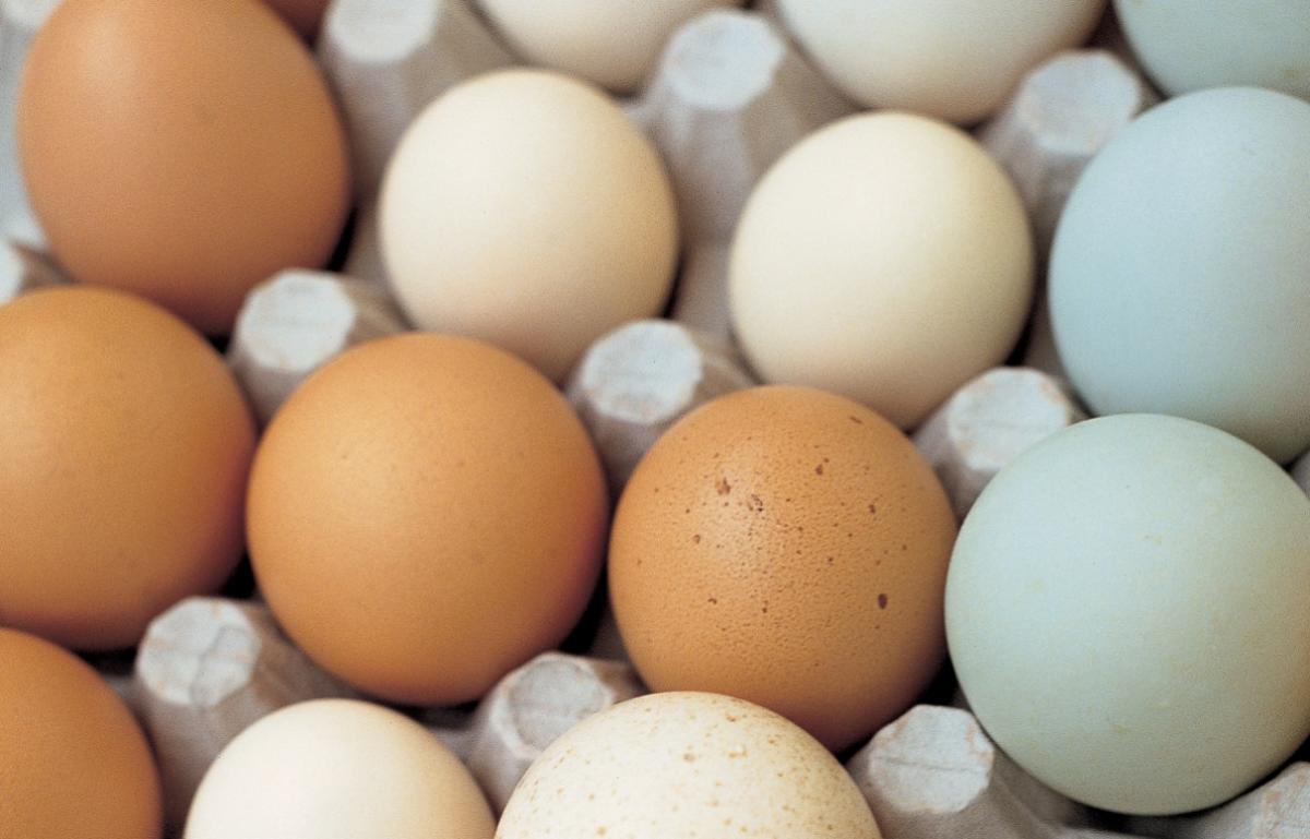 Ingredient htc eggs