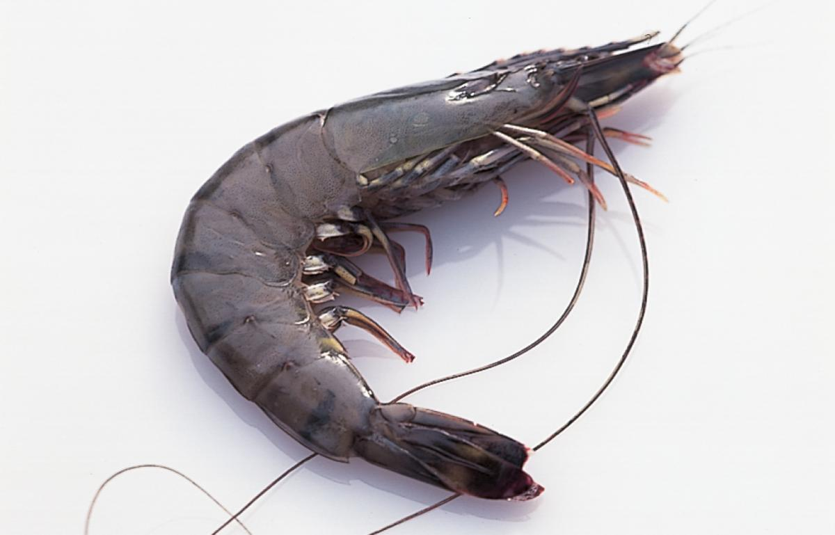 Ingredient htc prawns