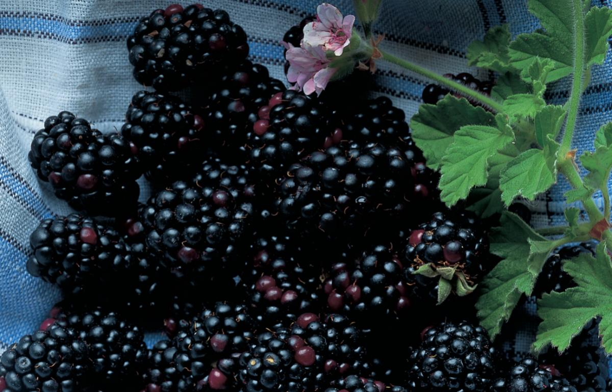 Ingredient vegetarian blackberries