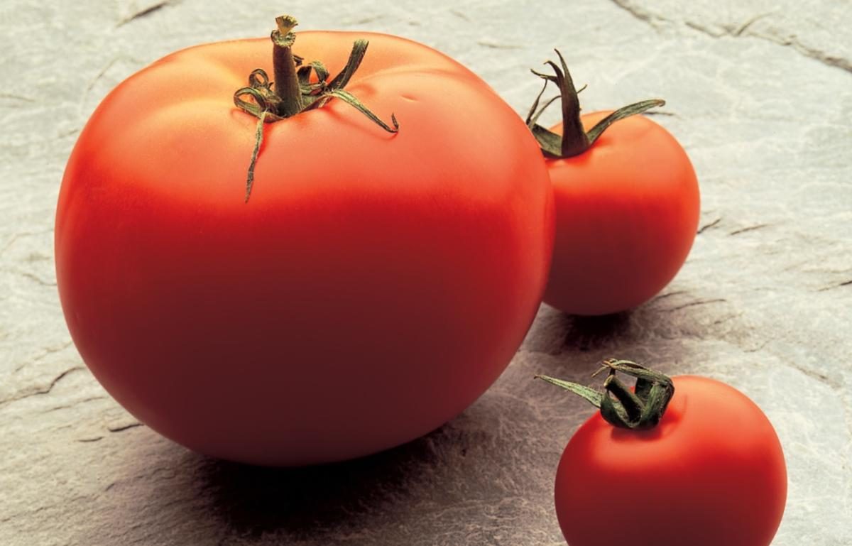 A picture of Delia's Tomato, Apple and Celery Cream Soup recipe