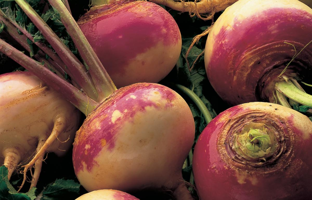Ingredient vegetarian turnips