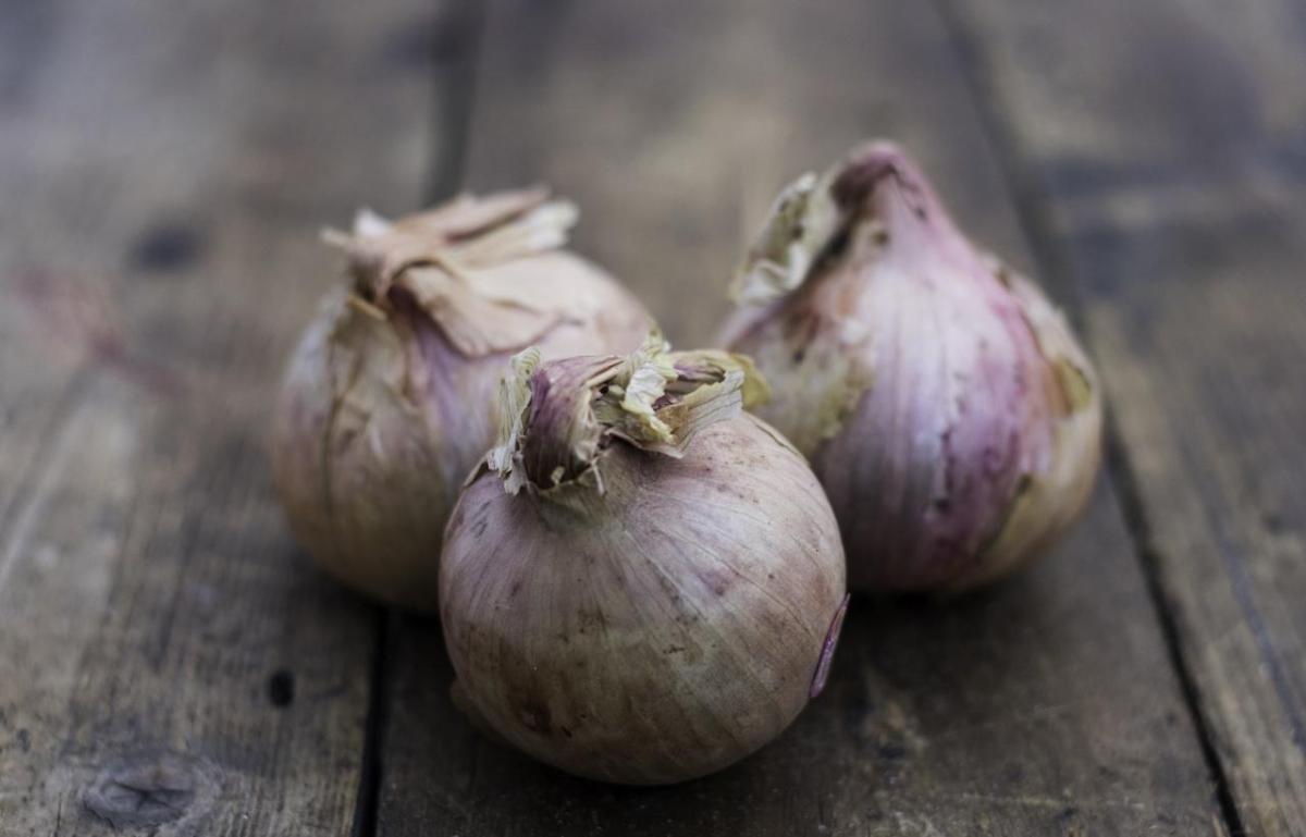 A picture of Rose's October Shop Watch - Roscoff Onions