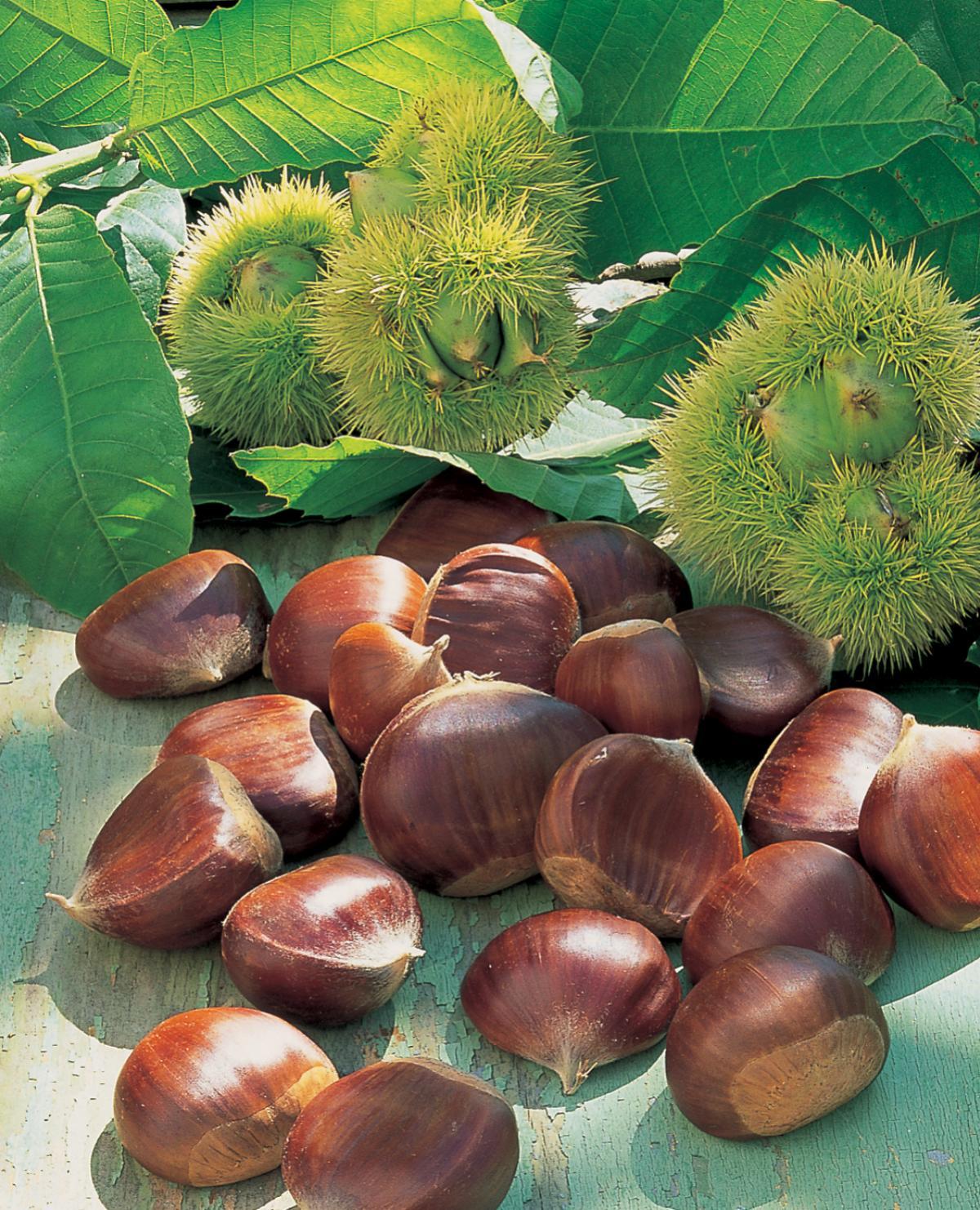 A picture of Delia's Chestnuts recipes