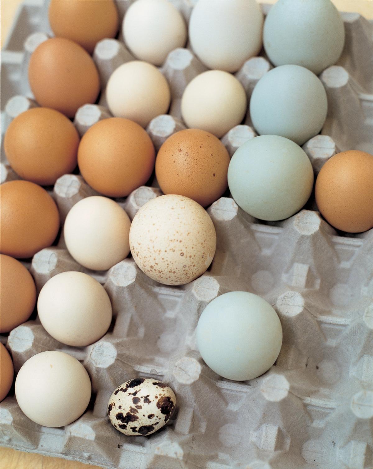 Egg yolk consumption, carotid plaque & bad science