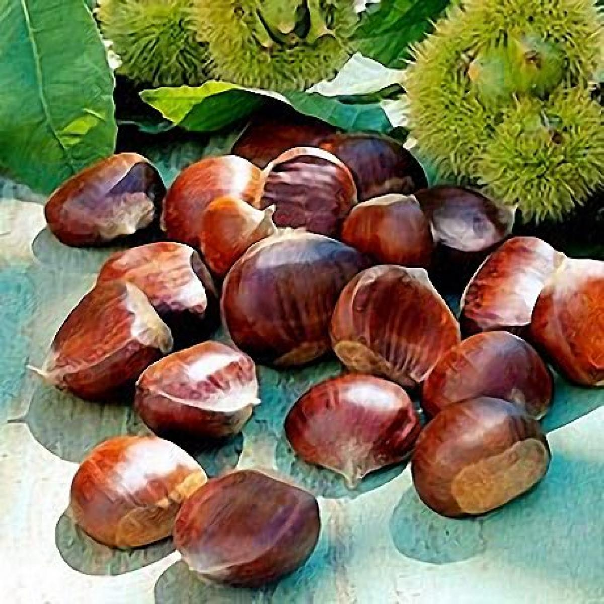 A picture of Delia's Roast Chestnuts recipe