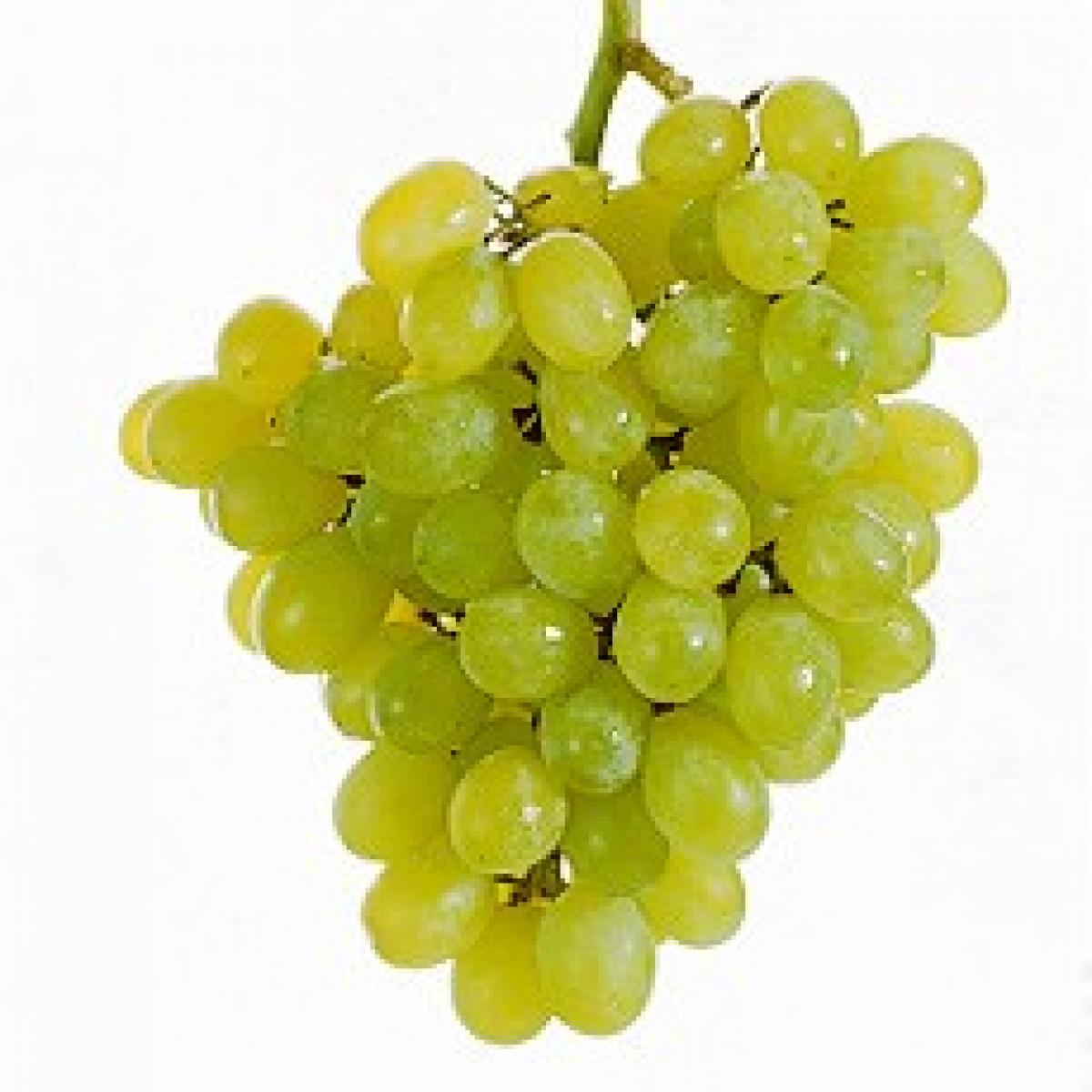 Grapes 19476
