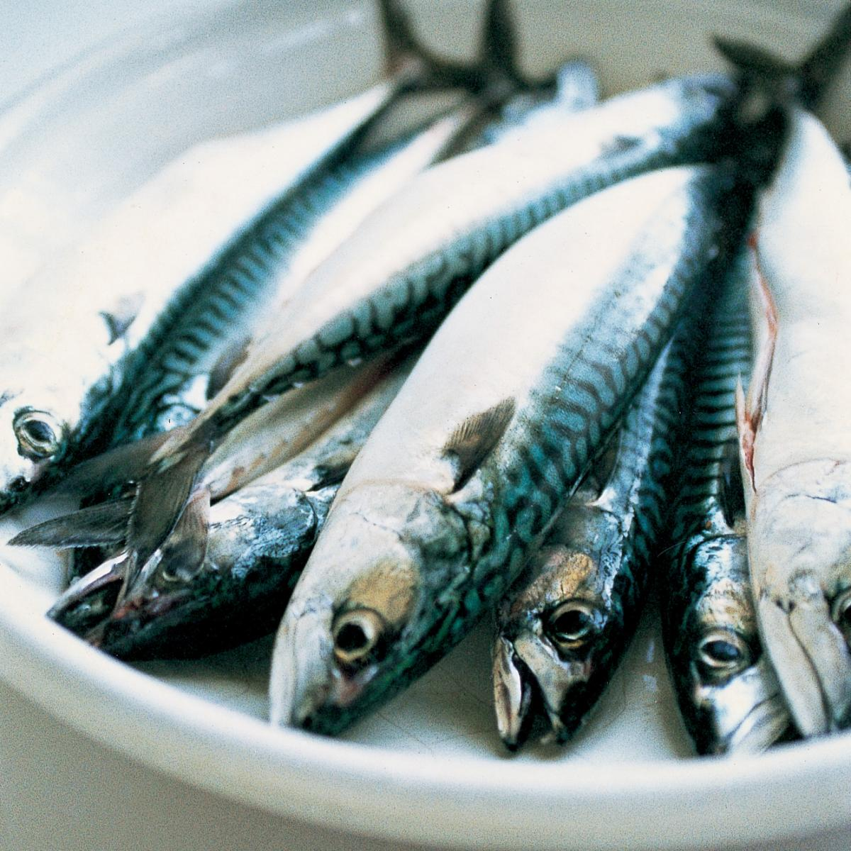 Ingredient fish mackerel