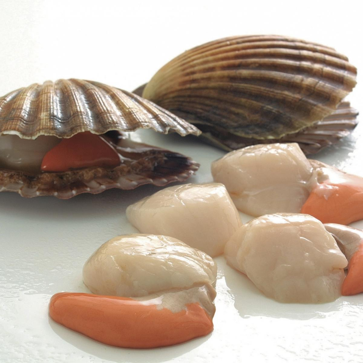 Ingredient fish scallops