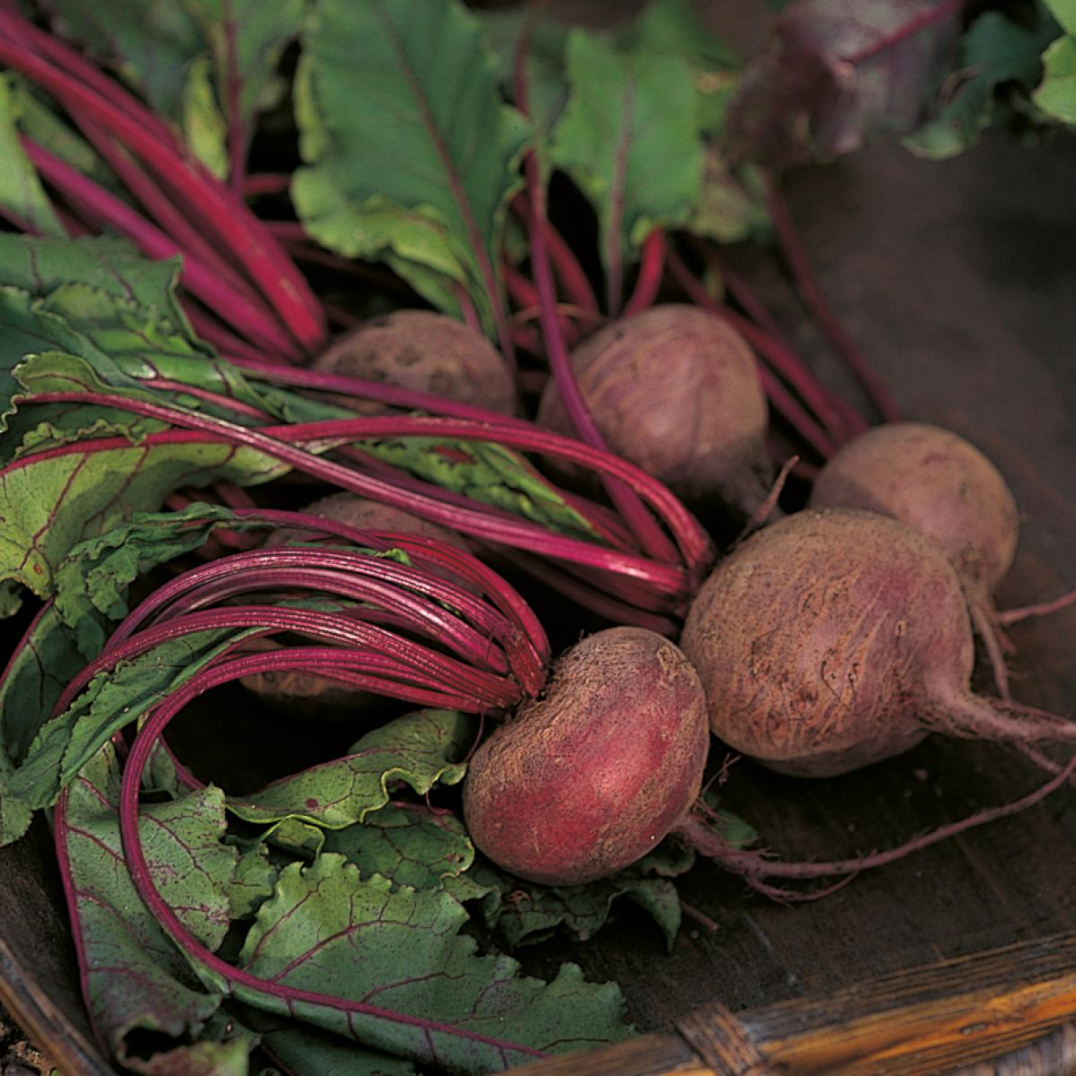 Ingredient htc beetroot