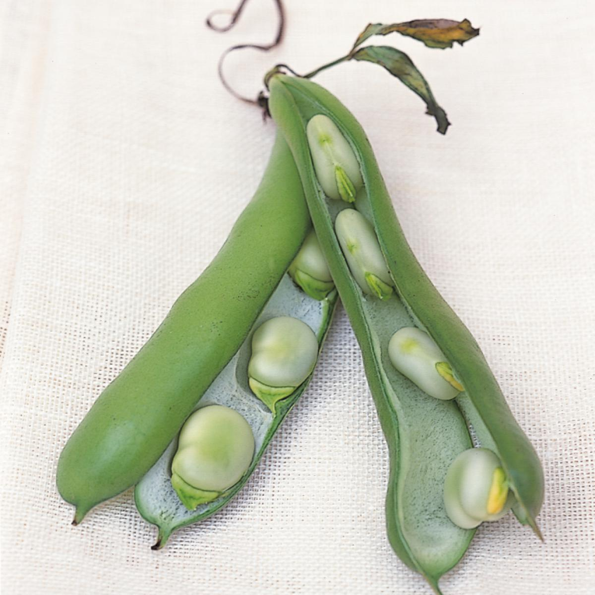 A picture of Delia's Purée of Broad Beans recipe