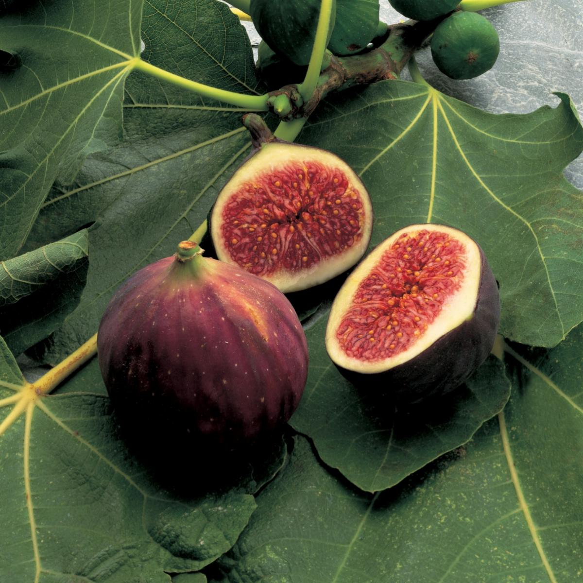 Ingredient italian figs 0