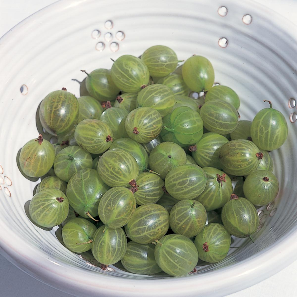 Ingredient puddings gooseberries