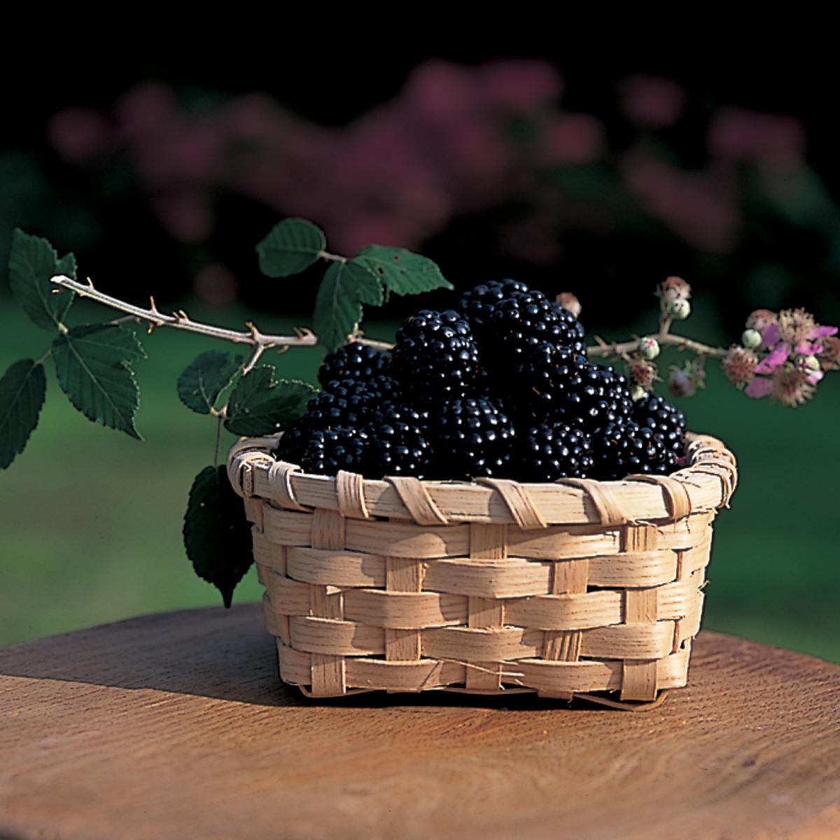 Ingredient soup blackberries