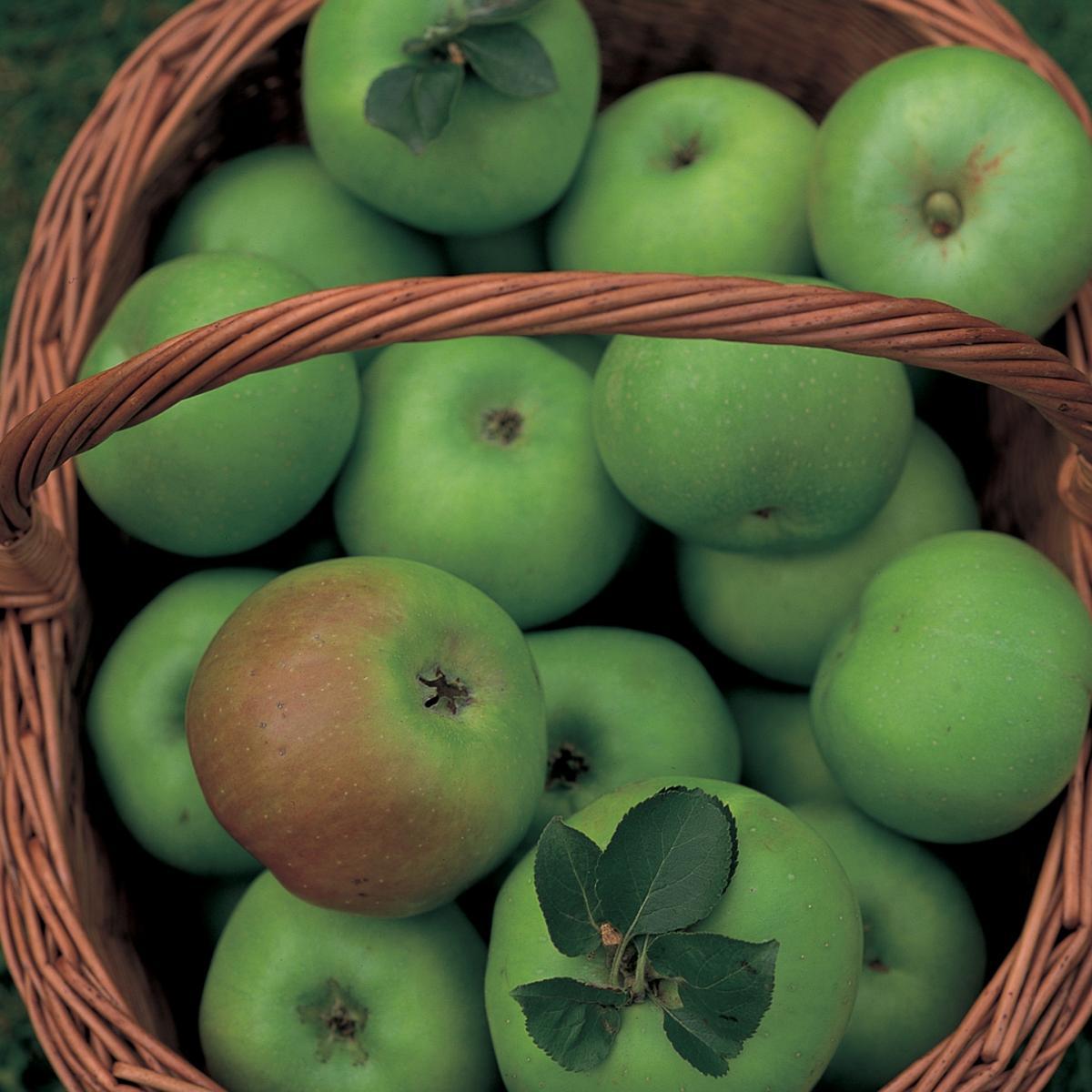 Ingredient soup bramley apples