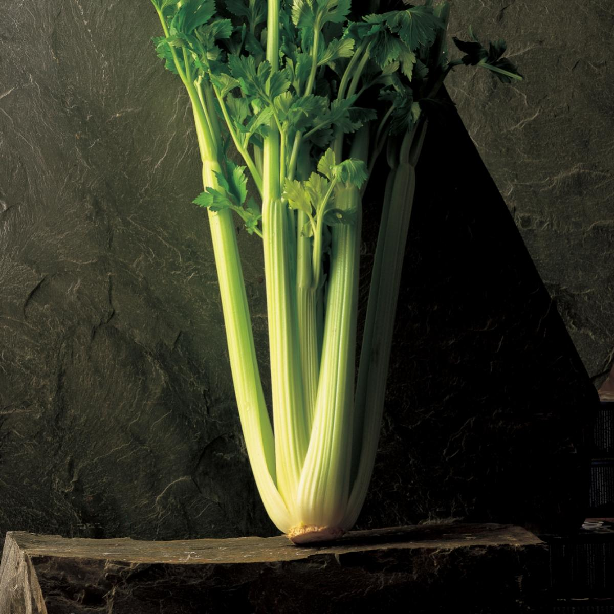 Ingredient soup celery