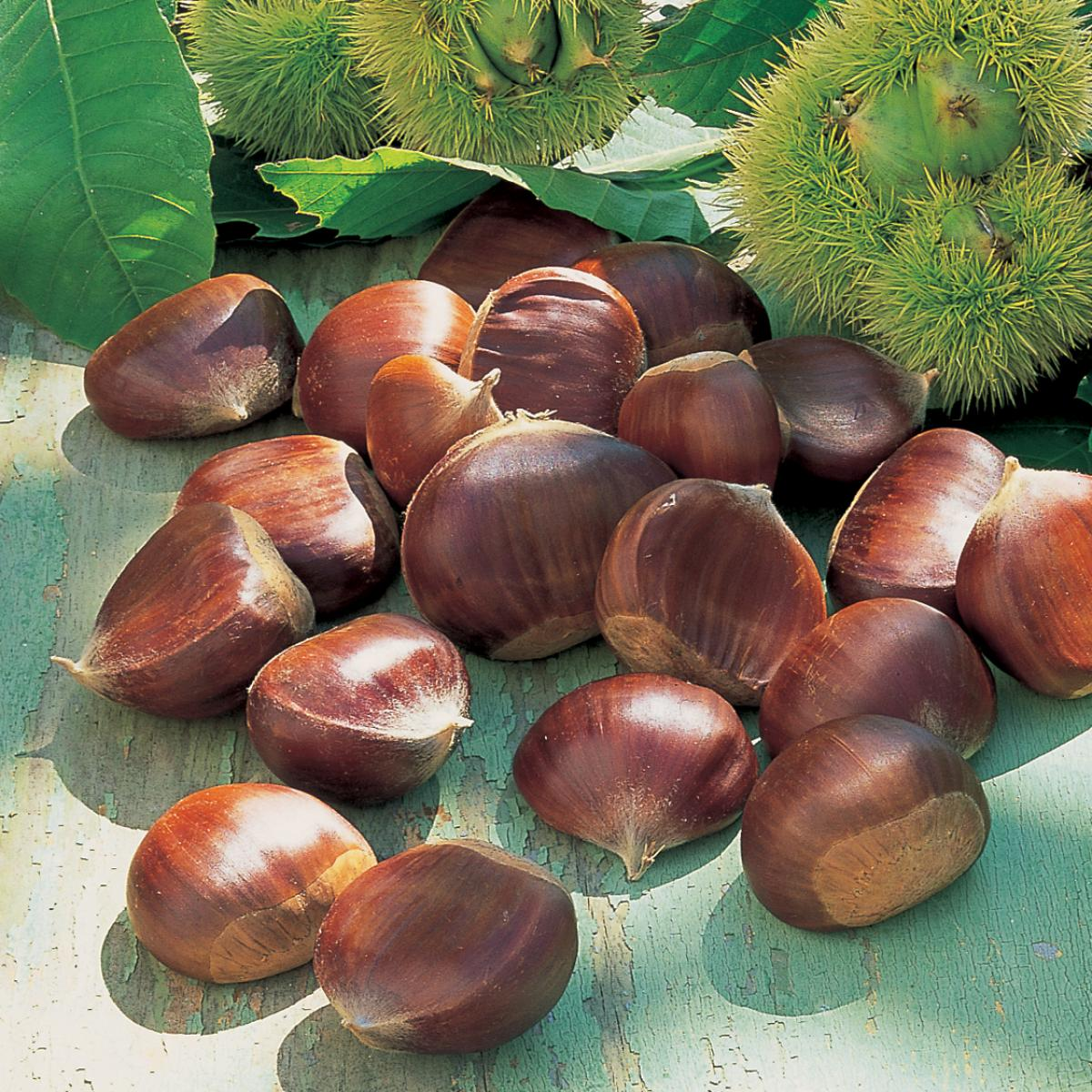 Ingredient soup chestnuts