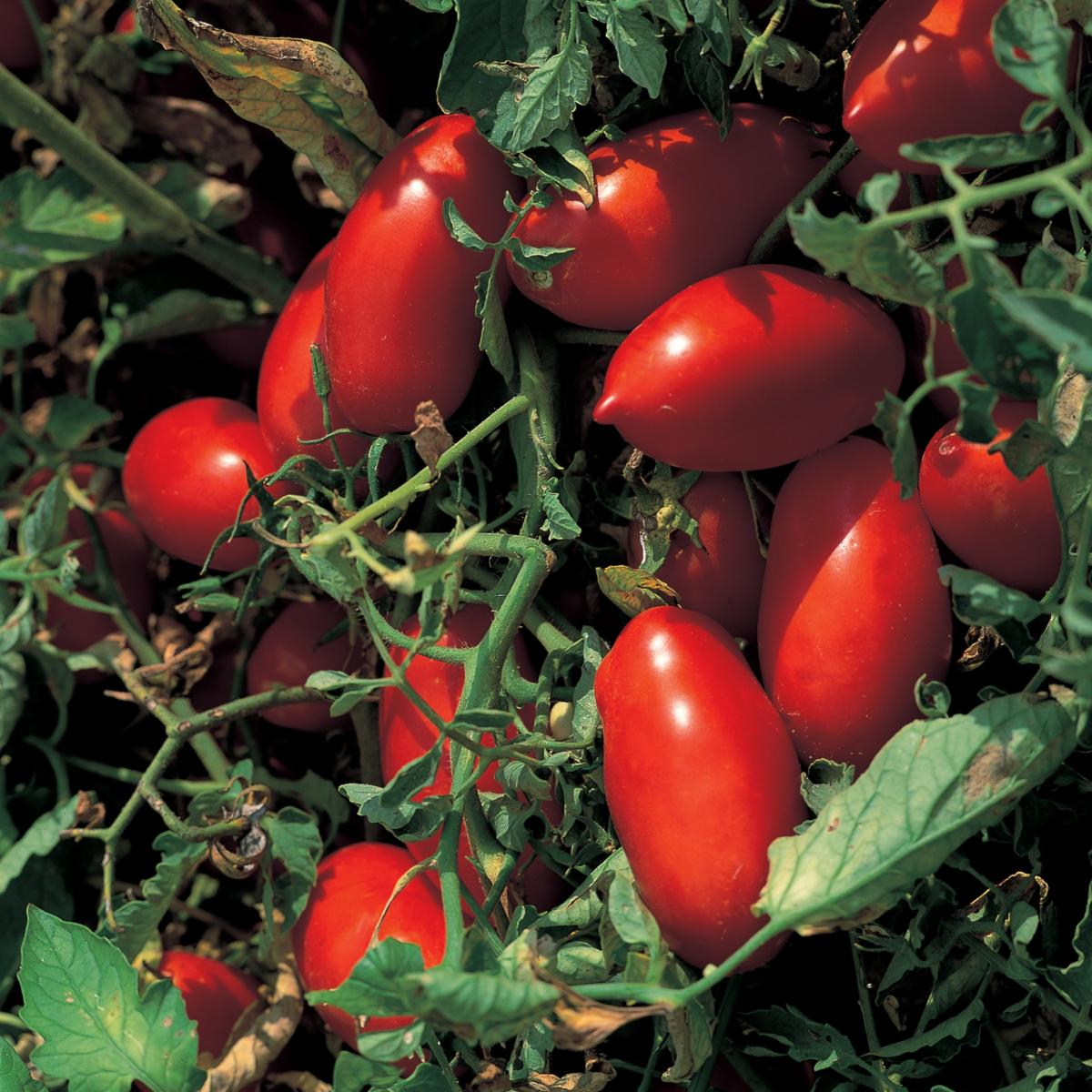 A picture of Delia's Tomato and Olive Vinaigrette recipe
