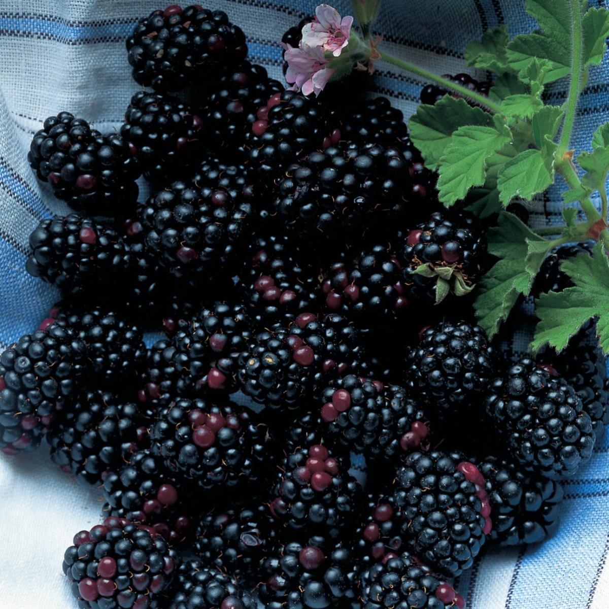 Ingredient vegetarian blackberries
