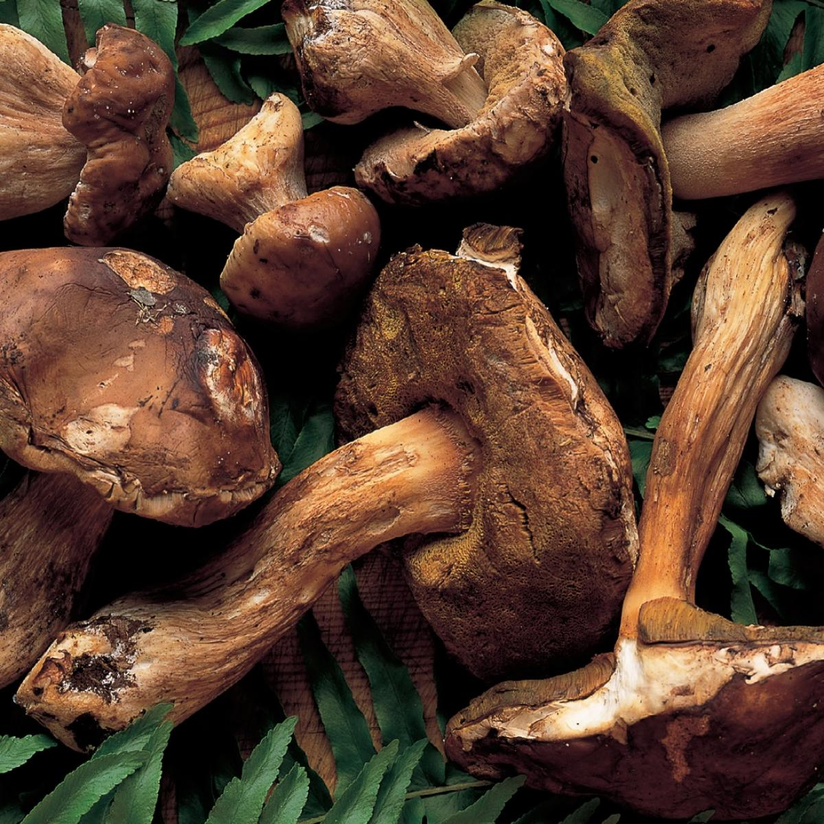 A picture of Delia's Wild Mushroom Soup with Madeira recipe