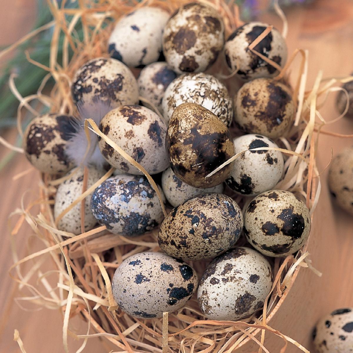 Ingredient vegetarian quails eggs