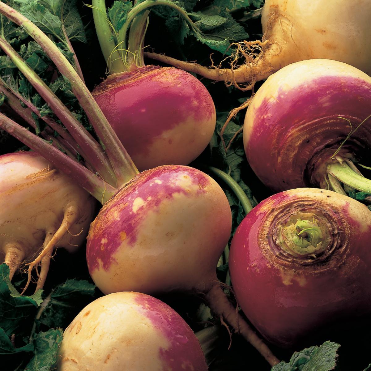 Ingredient vegetarian turnips