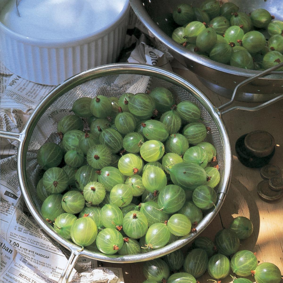 A picture of Delia's English Gooseberry Cobbler recipe