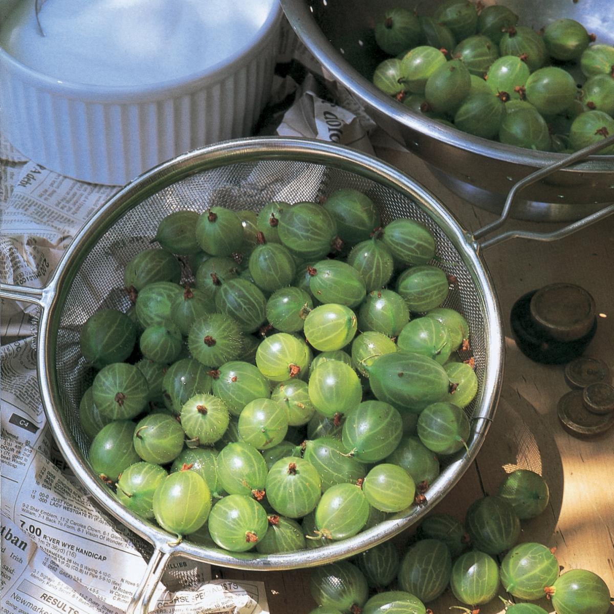 Puddings english gooseberry cobbler