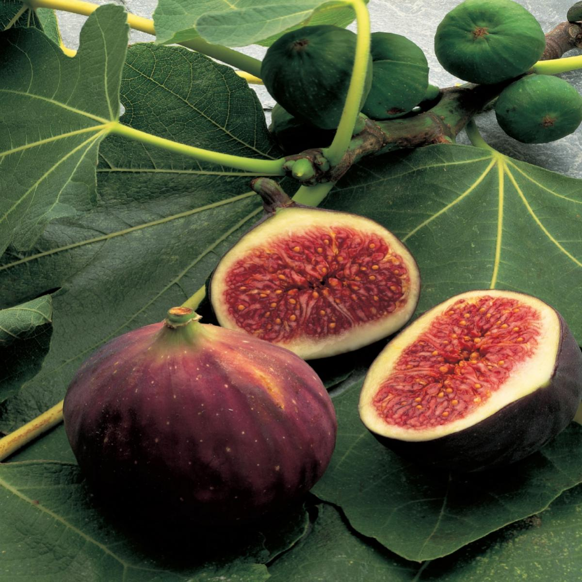 Vegetarian compote of fresh figs in muscat wine with vanilla custard