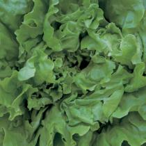 A picture of Delia's Chunky Green Salad recipe