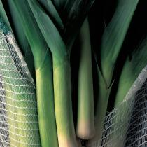 A picture of Delia's Sautéed Leeks recipe